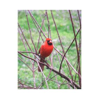 Impressão Em Canvas Pássaro cardinal vermelho