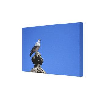 Impressão Em Canvas Pássaro da Nova Iorque do céu azul do pombo do