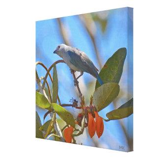 Impressão Em Canvas Pássaro de Rican da costela do Tanager das