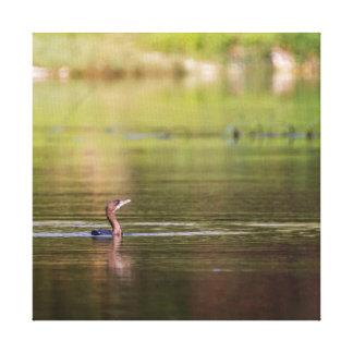 Impressão Em Canvas Pássaro do Cormorant que nada pacificamente