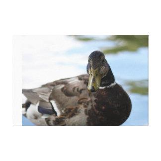 Impressão Em Canvas Pato do pato selvagem
