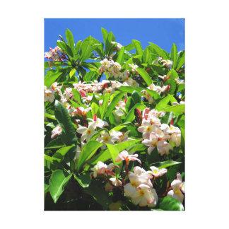 Impressão Em Canvas Plumeria havaiano