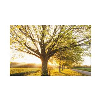 Impressão Em Canvas Por do sol bonito através de uma linha de árvores
