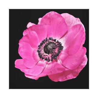 Impressão Em Canvas Preto floral da papoila cor-de-rosa brilhante