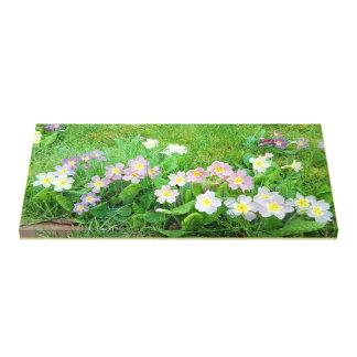 Impressão Em Canvas Primulas doces