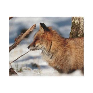 Impressão Em Canvas Raposa vermelha na neve - vista lateral