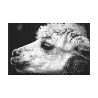 Impressão Em Canvas Retrato da lado-vista da alpaca