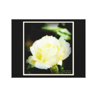 Impressão Em Canvas Rosa branco impressionante
