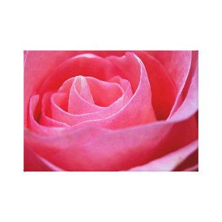 Impressão Em Canvas Rosa Unfurling do rosa