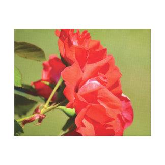 Impressão Em Canvas Rosa vermelha bonita da foto do fim-acima no verde