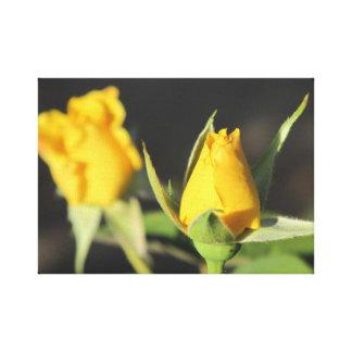 Impressão Em Canvas Rosas amarelos