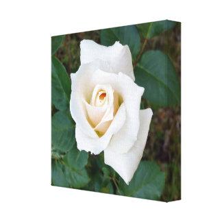 Impressão Em Canvas rosebud branco