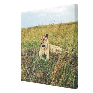 Impressão Em Canvas Safari