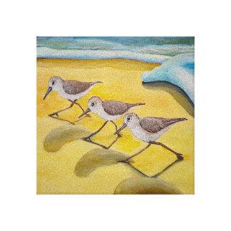 Impressão Em Canvas Sanderlings