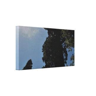 Impressão Em Canvas Sequoia.