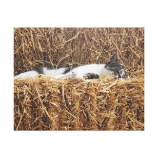 Impressão Em Canvas Sesta do gato da tarde