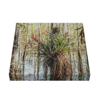 Impressão Em Canvas Surpresa no pântano - um Bromeliad em uma árvore