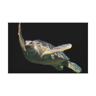 Impressão Em Canvas Tartaruga de mar verde