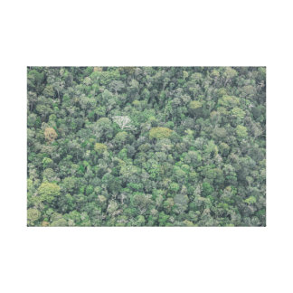 Impressão Em Canvas The Amazon Forest
