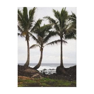 Impressão Em Canvas Trio havaiano da palmeira