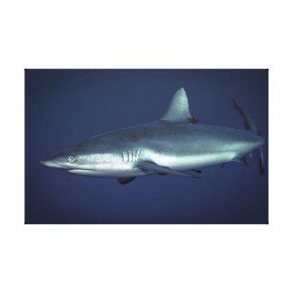 Impressão Em Canvas Tubarão cinzento do recife no Yap Micronesia