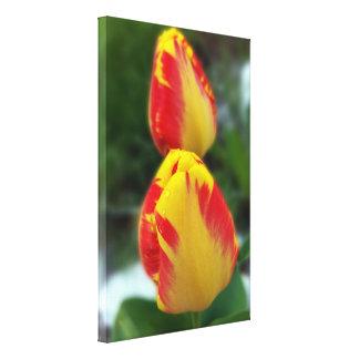 Impressão Em Canvas tulipas vermelhas amarelas