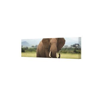 Impressão Em Canvas Único elefante africano do original
