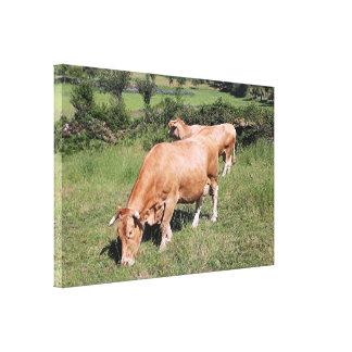 Impressão Em Canvas Vacas no campo no EL Camino, espanha