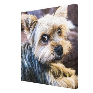 Impressão Em Canvas Yorkshire terrier