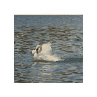 Impressão Em Madeira Cisne que espirra na água
