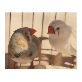 Impressão Em Madeira Dois pássaros bonitos do passarinho atrás dos