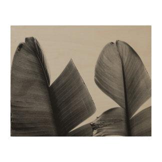 Impressão Em Madeira Folhas da árvore de banana no Sepia