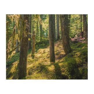 Impressão Em Madeira Impressão de bloco de madeira Sunlit da floresta