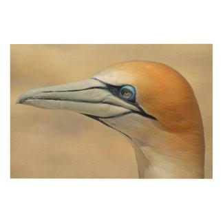 Impressão Em Madeira Norte-gannet fora da costa de Nova Zelândia
