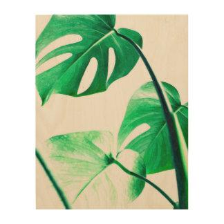 Impressão Em Madeira O monstera verde deixa a folha exótica tropical