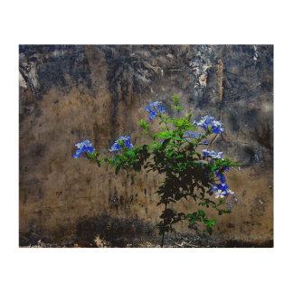 Impressão Em Madeira Plumbago azul