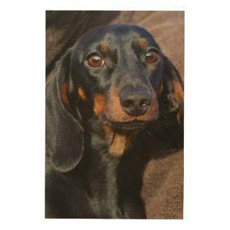 Impressão Em Madeira Retrato lindo do animal do dachshund