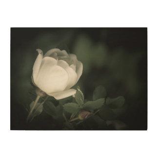 Impressão Em Madeira Selvagem branco aumentou em um fundo escuro