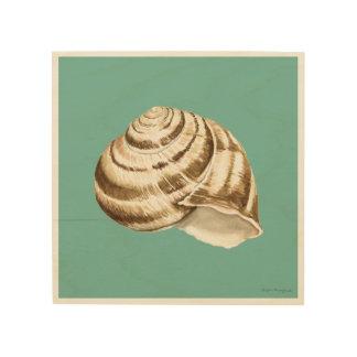 Impressão Em Madeira Sepia Shell listrado na cerceta