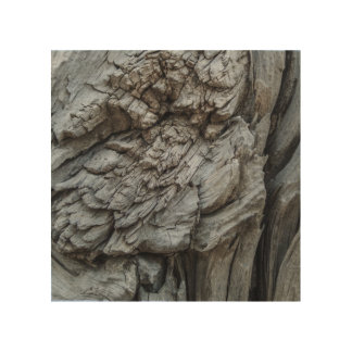 Impressão Em Madeira Textura abstrata do tronco de árvore