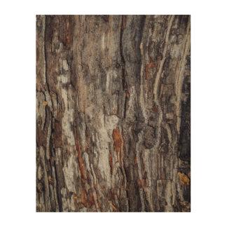 Impressão Em Madeira Textura do latido de árvore