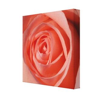 Impressão Em Tela A espiral macia de um rosa