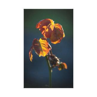 Impressão Em Tela A simplicidade das folhas