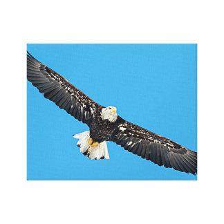 Impressão Em Tela Águia americana em vôo