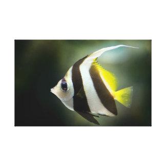 Impressão Em Tela Angelfish