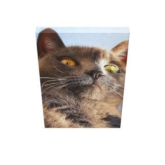 Impressão Em Tela Arte cinzenta bonita da parede do gato