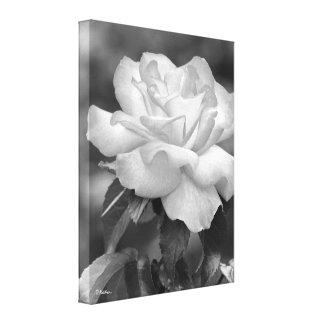 Impressão Em Tela Arte fotográfica de incandescência preto e branco