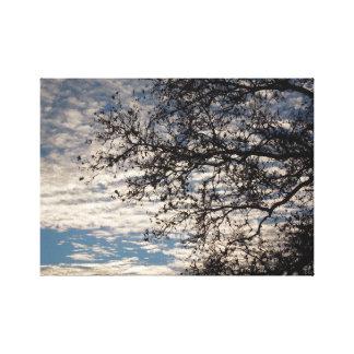 Impressão Em Tela Árvore do sicômoro no céu nebuloso perto do