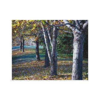 Impressão Em Tela Árvores Ontário da queda