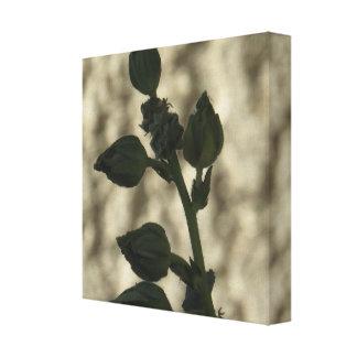 Impressão Em Tela As flores do Hollyhock